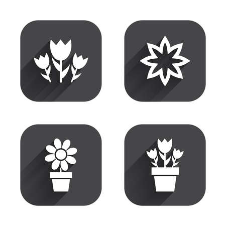 camomiles macro: Flowers icons. Bouquet of roses symbol. Flower with petals and leaves in a pot. Square flat buttons with long shadow.