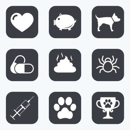 feces: Veterinary, pets icons. Dog paw, syringe and winner cup signs. Pills, heart and feces symbols. Flat square buttons with rounded corners. Illustration