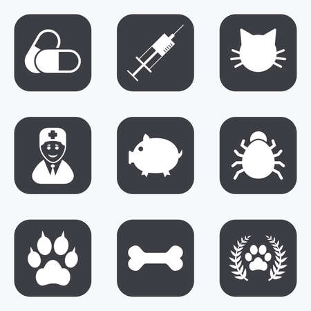 cat suit: Veterinary, pets icons. Paw, syringe and bone signs. Pills, cat and doctor symbols. Flat square buttons with rounded corners.
