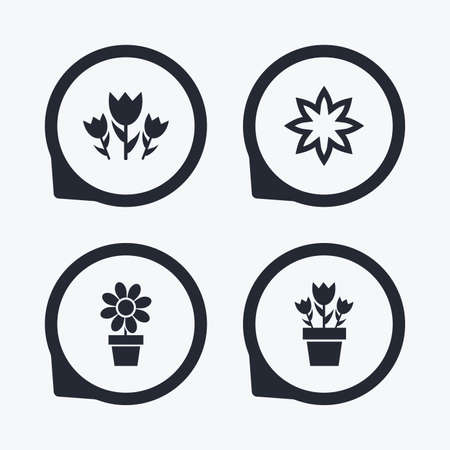 camomiles macro: Flowers icons. Bouquet of roses symbol. Flower with petals and leaves in a pot. Flat icon pointers.