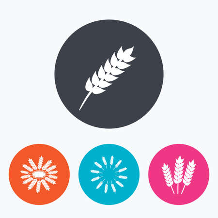 corn stalk: Agricultural icons. Gluten free or No gluten signs. Wreath of Wheat corn symbol. Circle flat buttons with icon.