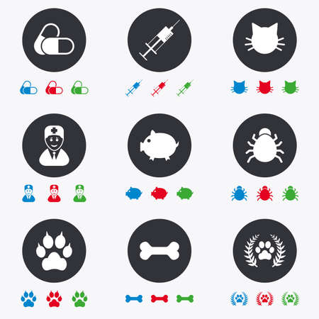 cat suit: Veterinary, pets icons. Paw, syringe and bone signs. Pills, cat and doctor symbols. Flat circle buttons with icons.