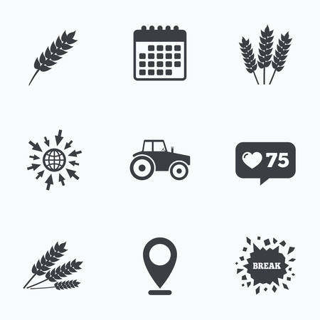 corn stalk: Calendar, like counter and go to web icons. Agricultural icons. Wheat corn or Gluten free signs symbols. Tractor machinery. Location pointer. Illustration
