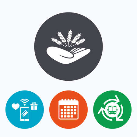 drought: Agriculture insurance sign icon. Hand holds wheat. Protection against crop failure and drought. Mobile payments, calendar and wifi icons. Bus shuttle.