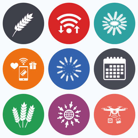 set free: Wifi, mobile payments and drones icons. Agricultural icons. Gluten free or No gluten signs. Wreath of Wheat corn symbol. Calendar symbol.