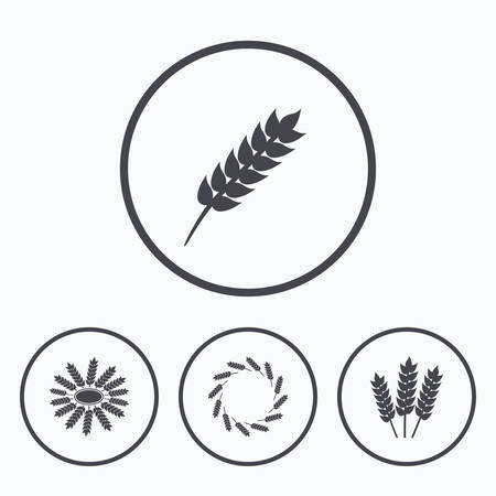 corn stalk: Agricultural icons. Gluten free or No gluten signs. Wreath of Wheat corn symbol. Icons in circles. Illustration