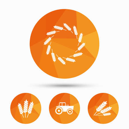 corn stalk: Agricultural icons. Wheat corn or Gluten free signs symbols. Tractor machinery. Triangular low poly buttons with shadow. Vector Illustration