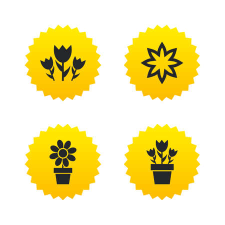 camomiles macro: Flowers icons. Bouquet of roses symbol. Flower with petals and leaves in a pot. Yellow stars labels with flat icons. Vector