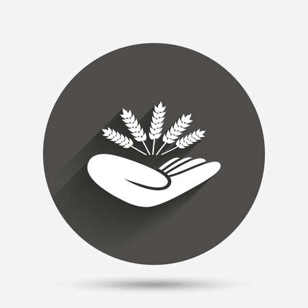 crop circle: Agriculture insurance sign icon. Hand holds wheat. Protection against crop failure and drought. Circle flat button with shadow. Vector Illustration