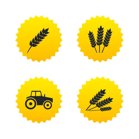 Agricultural icons. Wheat corn or Gluten free signs symbols. Tractor machinery. Yellow stars labels with flat icons. Vector