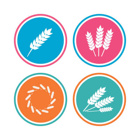 corn stalk: Agricultural icons. Gluten free or No gluten signs. Wreath of Wheat corn symbol. Colored circle buttons. Vector
