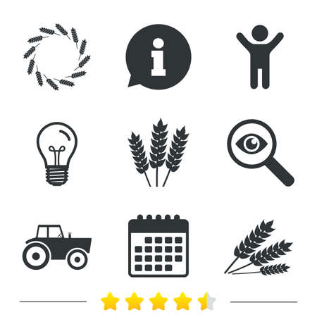 corn stalk: Agricultural icons. Wheat corn or Gluten free signs symbols. Tractor machinery. Information, light bulb and calendar icons. Investigate magnifier. Vector
