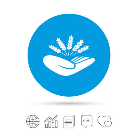 Agriculture insurance sign icon. Hand holds wheat. Protection against crop failure and drought. Copy files, chat speech bubble and chart web icons. Vector 일러스트