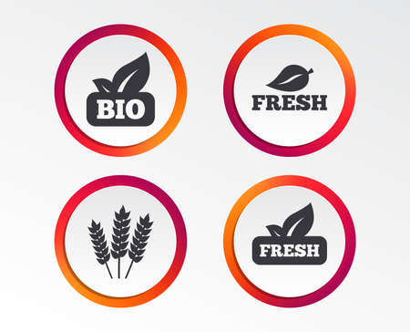 Natural fresh Bio food icons. Gluten free agricultural sign symbol. Infographic design buttons. Circle templates. Vector
