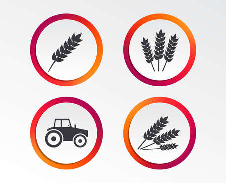 Agricultural icons on Wheat corn or Gluten free signs symbols.