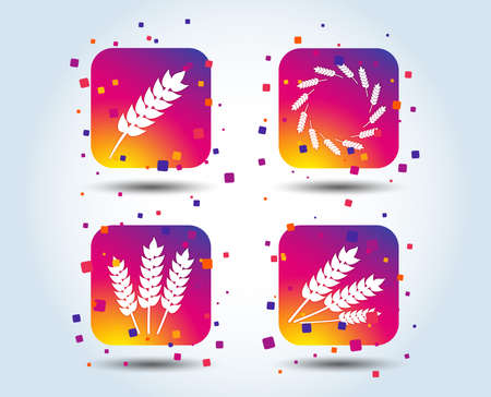 Agricultural icons. Gluten free or No gluten signs. Wreath of Wheat corn symbol. Colour gradient square buttons. Flat design concept. Vector Stok Fotoğraf - 105821007