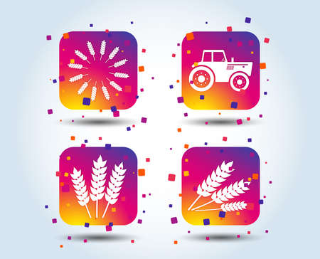 Agricultural icons. Wheat corn or Gluten free signs symbols. Tractor machinery. Colour gradient square buttons. Flat design concept. Vector Standard-Bild - 111102724