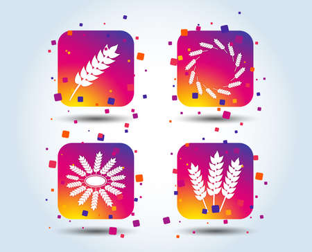Agricultural icons. Gluten free or No gluten signs. Wreath of Wheat corn symbol. Colour gradient square buttons. Flat design concept. Vector