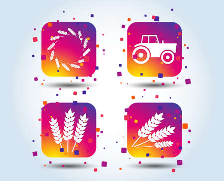 Agricultural icons. Wheat corn or Gluten free signs symbols. Tractor machinery. Colour gradient square buttons. Flat design concept. Vector Standard-Bild - 111103110