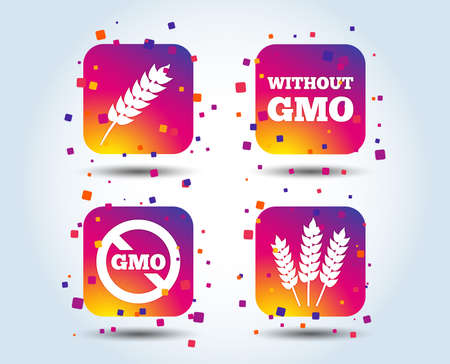 Agricultural icons. Gluten free or No gluten signs. Without Genetically modified food symbols. Colour gradient square buttons. Flat design concept. Vector