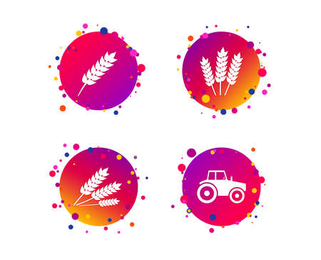Agricultural icons. Wheat corn or Gluten free signs symbols. Tractor machinery. Gradient circle buttons with icons. Random dots design. Vector Standard-Bild - 111104621