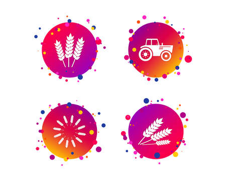 Agricultural icons. Wheat corn or Gluten free signs symbols. Tractor machinery. Gradient circle buttons with icons. Random dots design. Vector Standard-Bild - 126856412