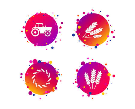Agricultural icons. Wheat corn or Gluten free signs symbols. Tractor machinery. Gradient circle buttons with icons. Random dots design. Vector