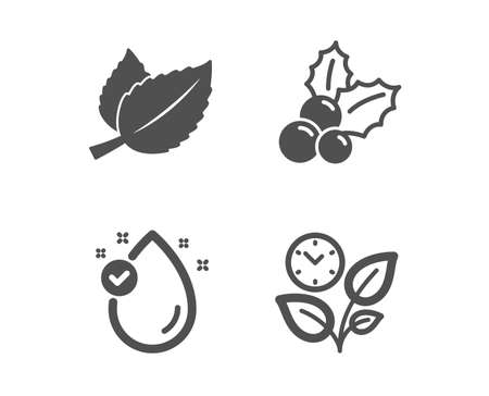 Set of Vitamin e, Mint leaves and Christmas holly icons. Leaves sign. Oil drop, Mentha herbal, Ilex aquifolium. Grow plant.  Classic design vitamin e icon. Flat design. Vector