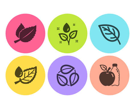 Mint leaves, Plants watering and Leaf dew icons simple set. Leaf, Leaves and Apple signs. Mentha herbal, Water drop. Nature set. Flat mint leaves icon. Circle button. Vector