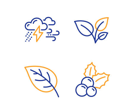 Leaves, Leaf and Bad weather icons simple set. Christmas holly sign. Grow plant, Environmental, Clouds. Ilex aquifolium. Nature set. Linear leaves icon. Colorful design set. Vector Illustration