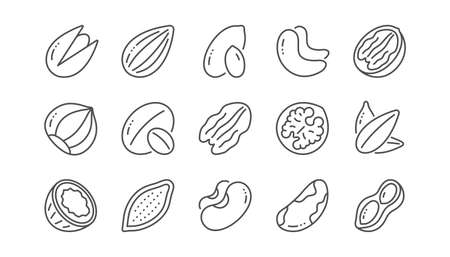 Nuts and seeds line icons. Hazelnut, Almond nut and Peanut. Sunflower seeds, Brazil nut, Pistachio icons. Walnut, Coconut and Cashew nuts. Linear set. Vector