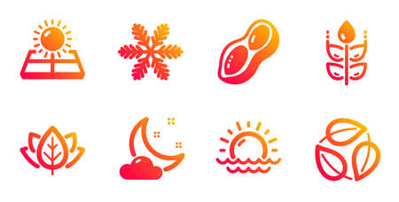 Gluten free, Peanut and Snowflake line icons set. Sunset, Night weather and Sun energy signs. Organic tested, Leaves symbols. Bio ingredients, Vegetarian nut. Nature set. Vector 일러스트