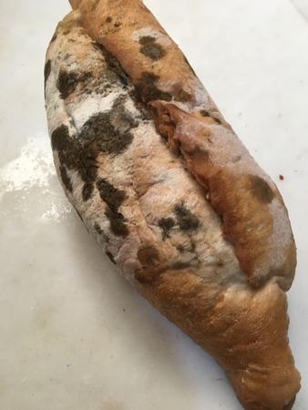 Moldy bread texture unit isolate