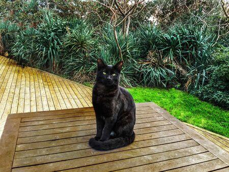 silueta de gato: Pet cats backround u