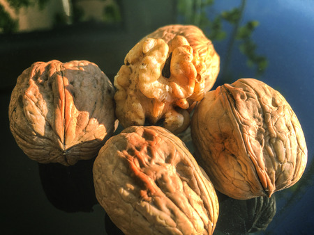 nutshells: walnut, nut plant background unit isolate