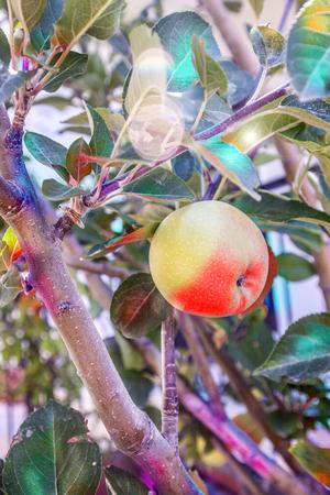 apple,malic background unit isolate Stock Photo
