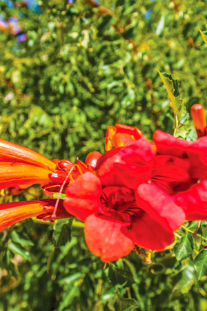 colorful flowers in the garden background Stock Photo