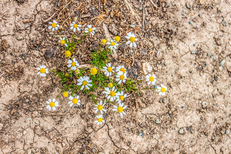 flowers in dry soil background Stock Photo