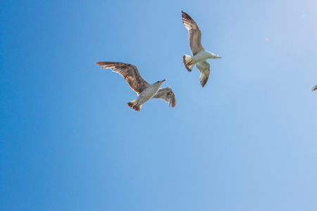 seagull background pattern