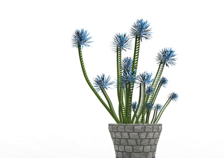flycatcher plant 3D isolate background