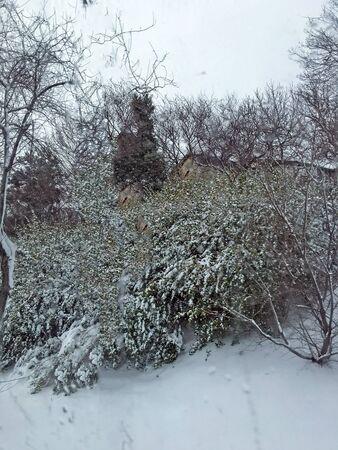 outdoors snow isolate background Stok Fotoğraf - 132405006