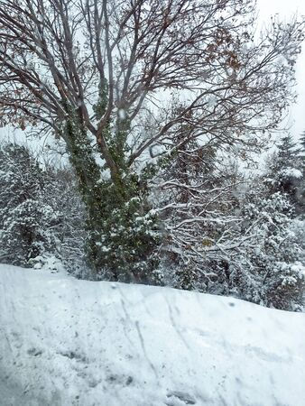 outdoors snow isolate background Stok Fotoğraf - 132405016
