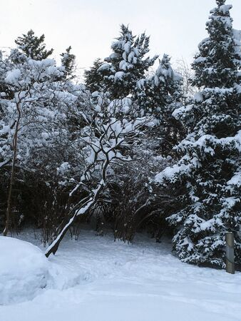 outdoors snow isolate background Stok Fotoğraf - 132405137
