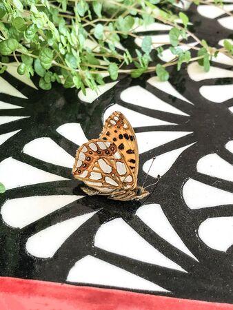 flower on butterfly isolate background Stok Fotoğraf - 132405208