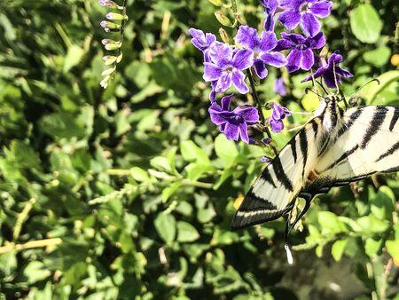 flower on butterfly isolate background Stok Fotoğraf