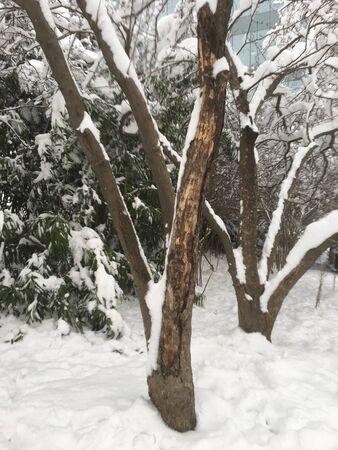outdoors snow isolate background Stok Fotoğraf - 132405087