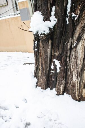 outdoors snow isolate background Stok Fotoğraf - 132404961
