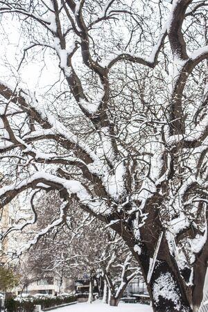 outdoors snow isolate background Stok Fotoğraf - 132404969