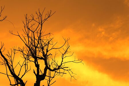 Natural background: silhouette barren tree against sunset photo