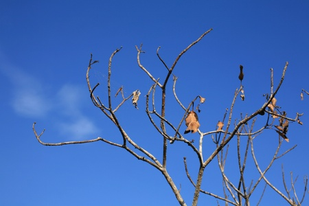 Background: dry branch and leaf against blue sky photo